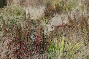 Perennial Meadow Fall-21